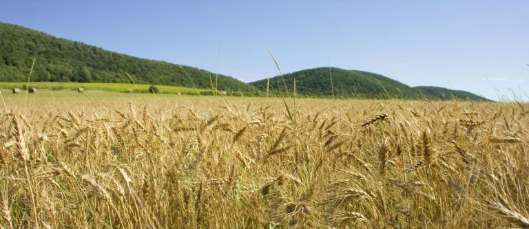 Read more about the article Poor Harvest Leads To Price Rises Affecting All Of The UK