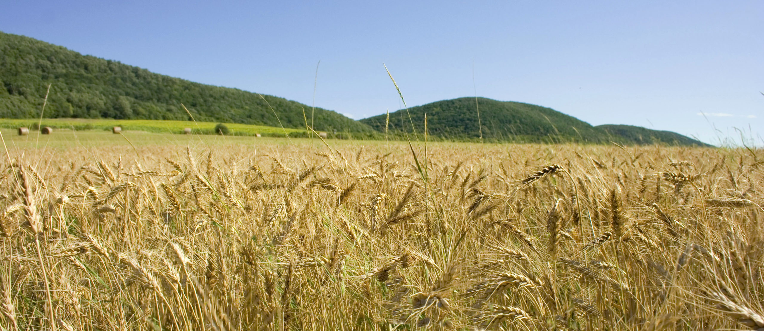 Poor Harvest Leads To Price Rises Affecting All Of The UK