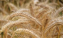 Bread Prices to Remain the Same – Despite Poor Harvest