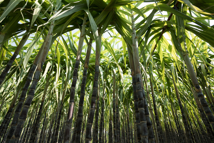 You are currently viewing Sugar: the next ingredient readied to come under fire for its climate effect?